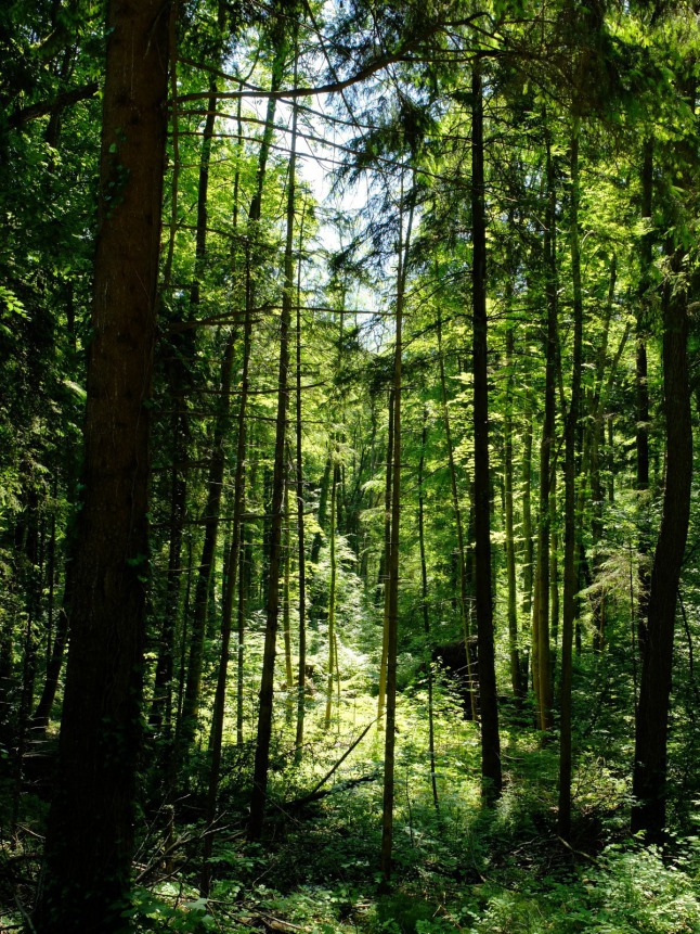 Alles voller Bäume