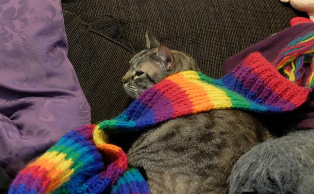 Nyan-Cat ruht sich aus