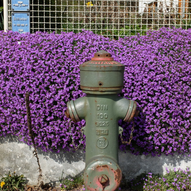 A wild Hydrant appears
