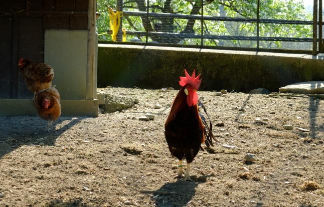Yo, Punk! Check nicht meine Chicks ab hier!