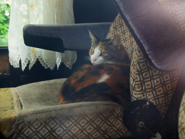 Katze im Bus