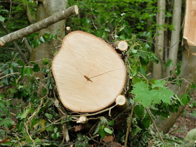 Umrankter Baum