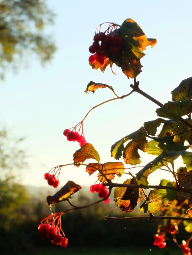 Leuchtende Beeren