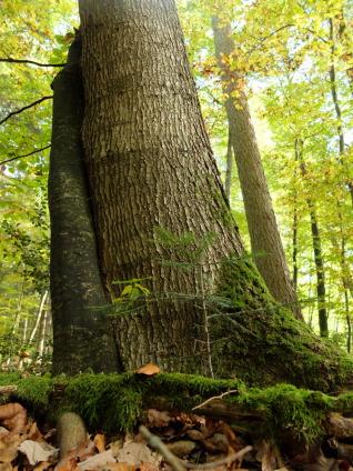 Die Bäume haben sich lieb