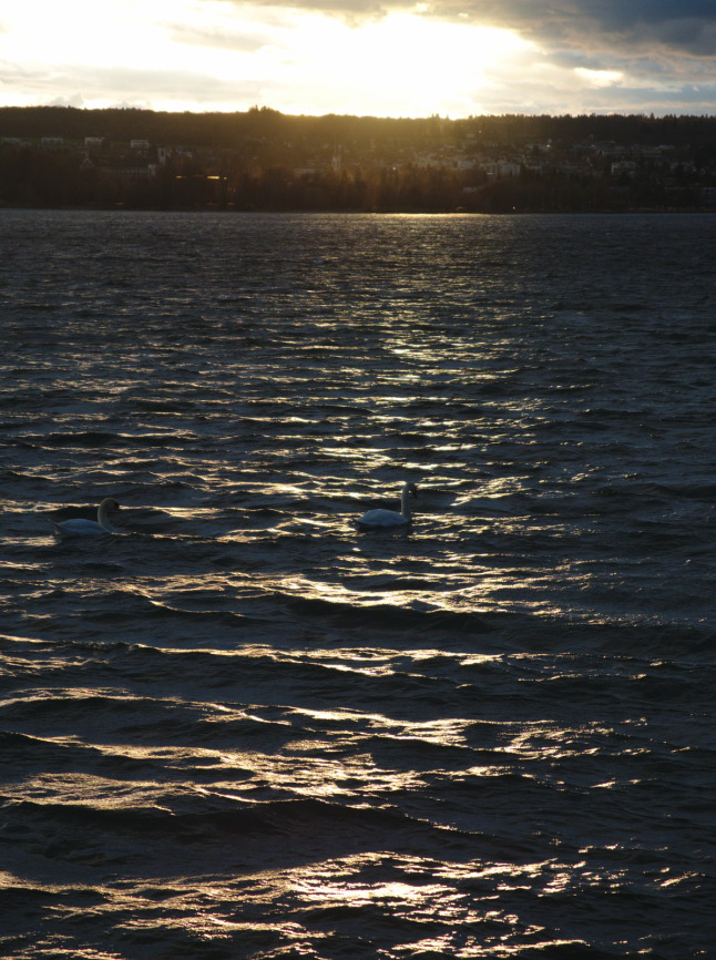Bootvogel im Sonnenuntergang