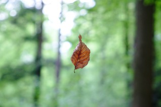 Flying Leaf