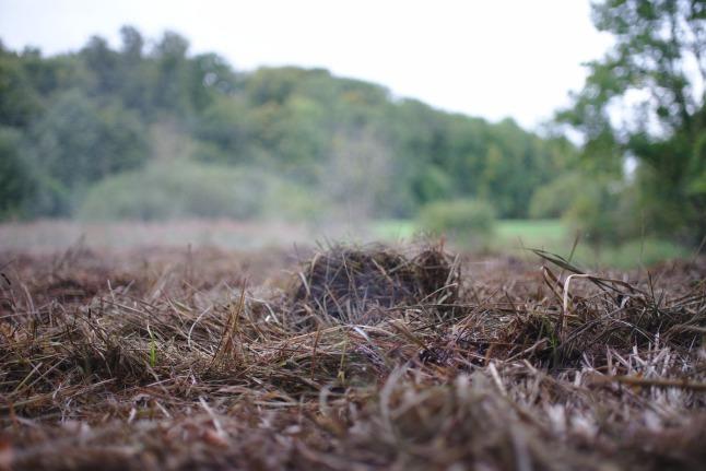 Dampfendes Gras