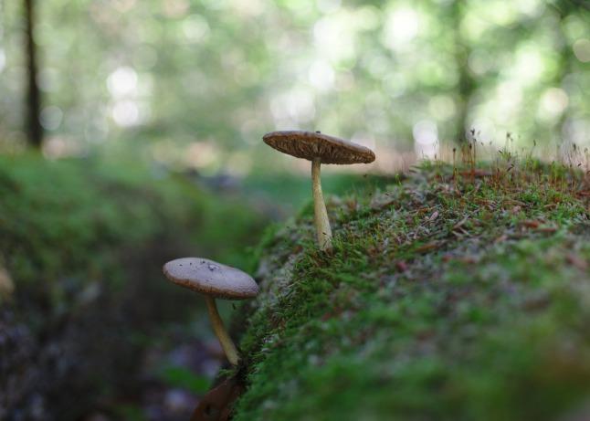 Portrait eines Pilzes