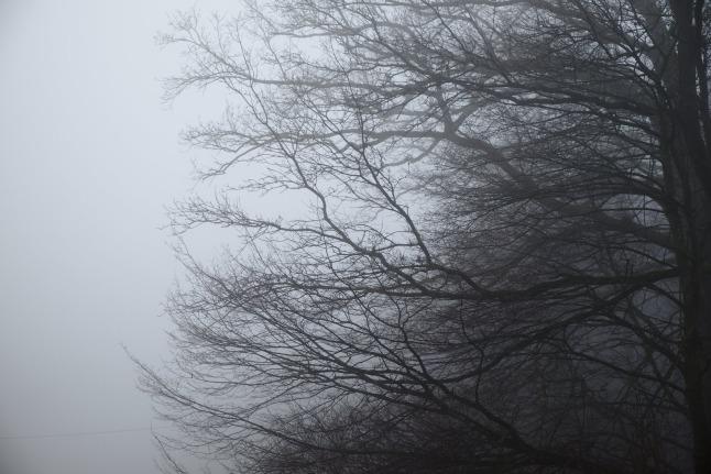 Ausstrecken zum Nebel