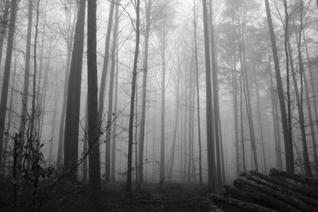 Dunstiger Wald