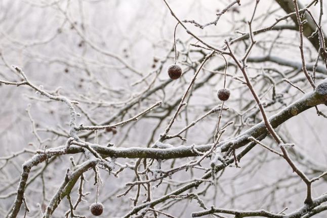 Schneestaub