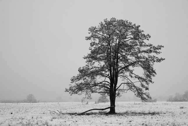 Kontrastbaum