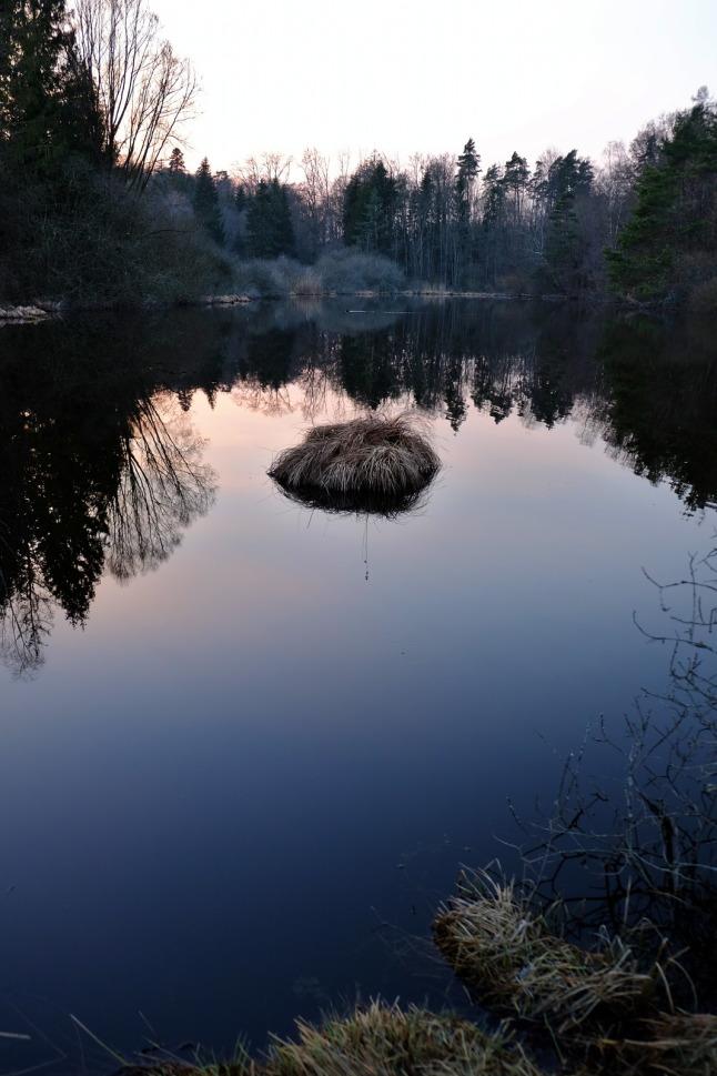 Pflanzenknubbel im Teich