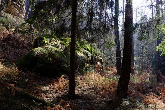 Waldbiotop