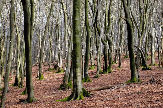 Vor lauter Bäumen...