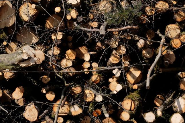 Holzstapeltapete