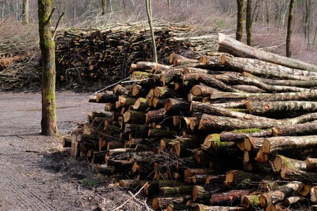 Wald abgelegt