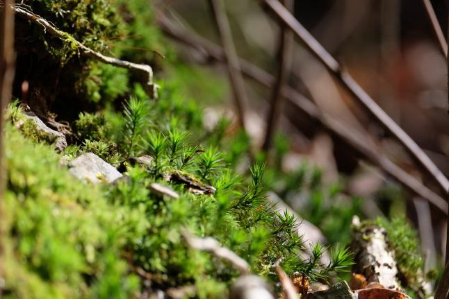 Walddetails