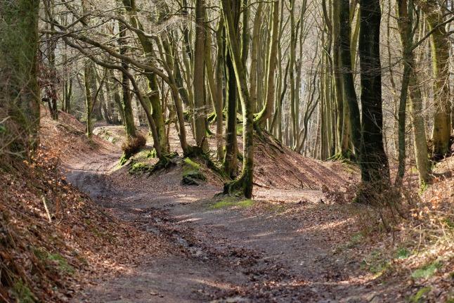 Matschweg