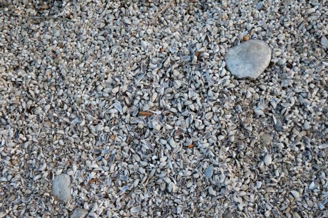 Bodenseemuscheln