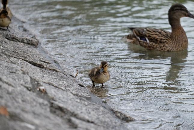 Hey ihr lahmen Enten... kommt ihr?