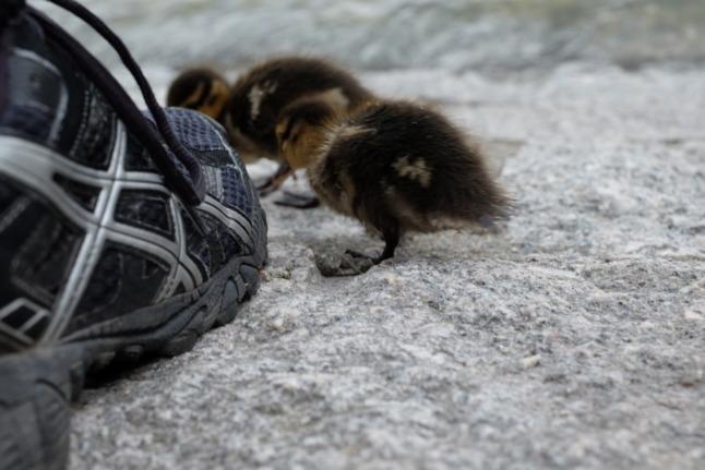 Oh, ein Schuh!