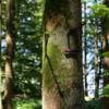 Dieser Baum ist sicher