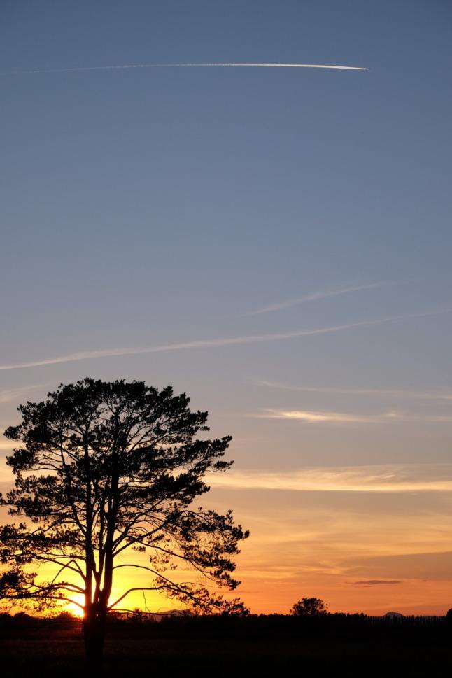Baum und Flugzeug