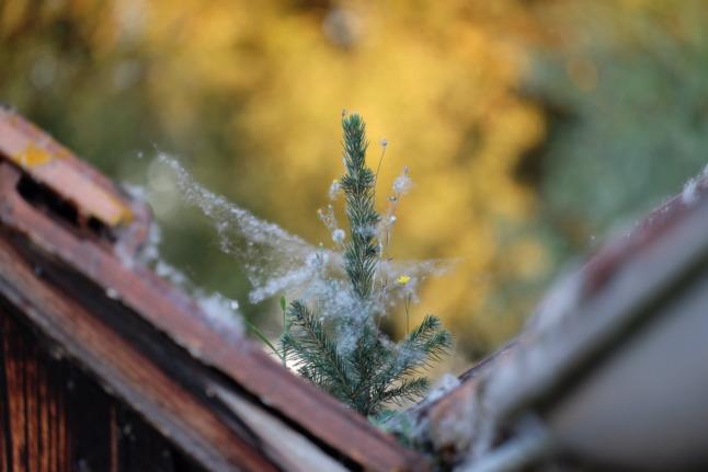 Wattebedeckter Weihnachtsbaum