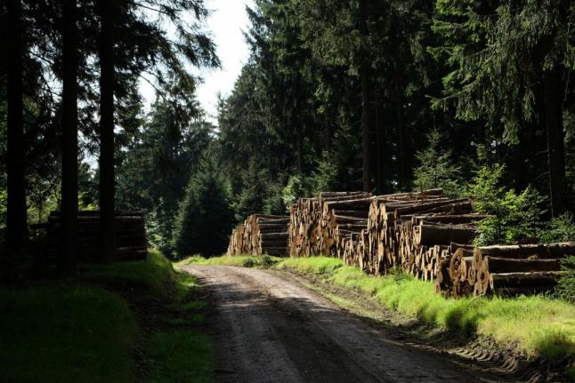Forstwirtschaftsweg