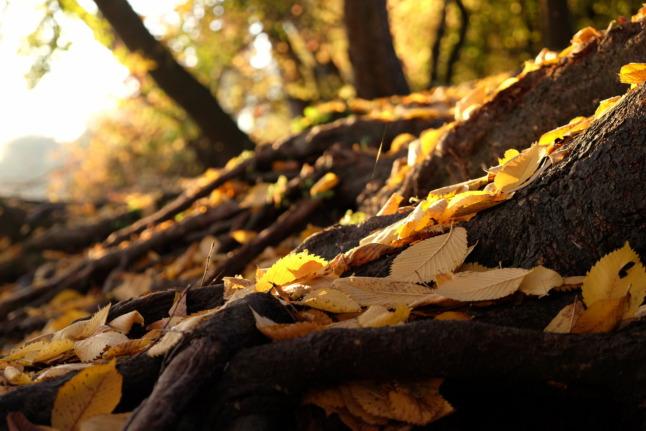 Mehr Herbst