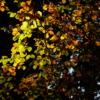 Buntes Blätterdach
