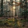 Gute Nacht, Wald